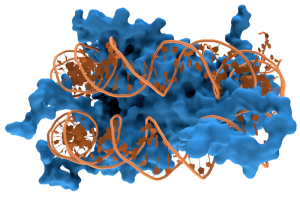 800px-Nucleosome1